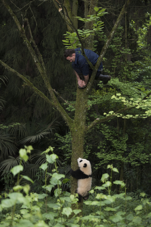 Australia's Science Channel   Q&A with panda expert Dr Jake
