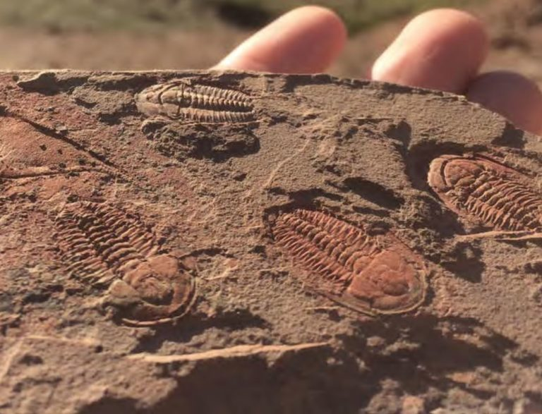 Evolution's 'big bang' cambrian fossil trilobite
