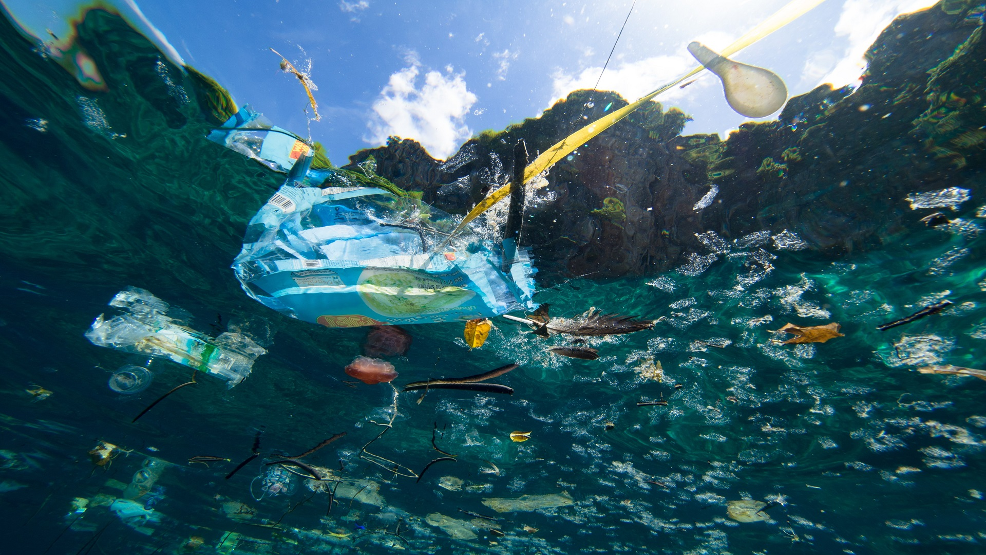 plastic pollution marine life pollution