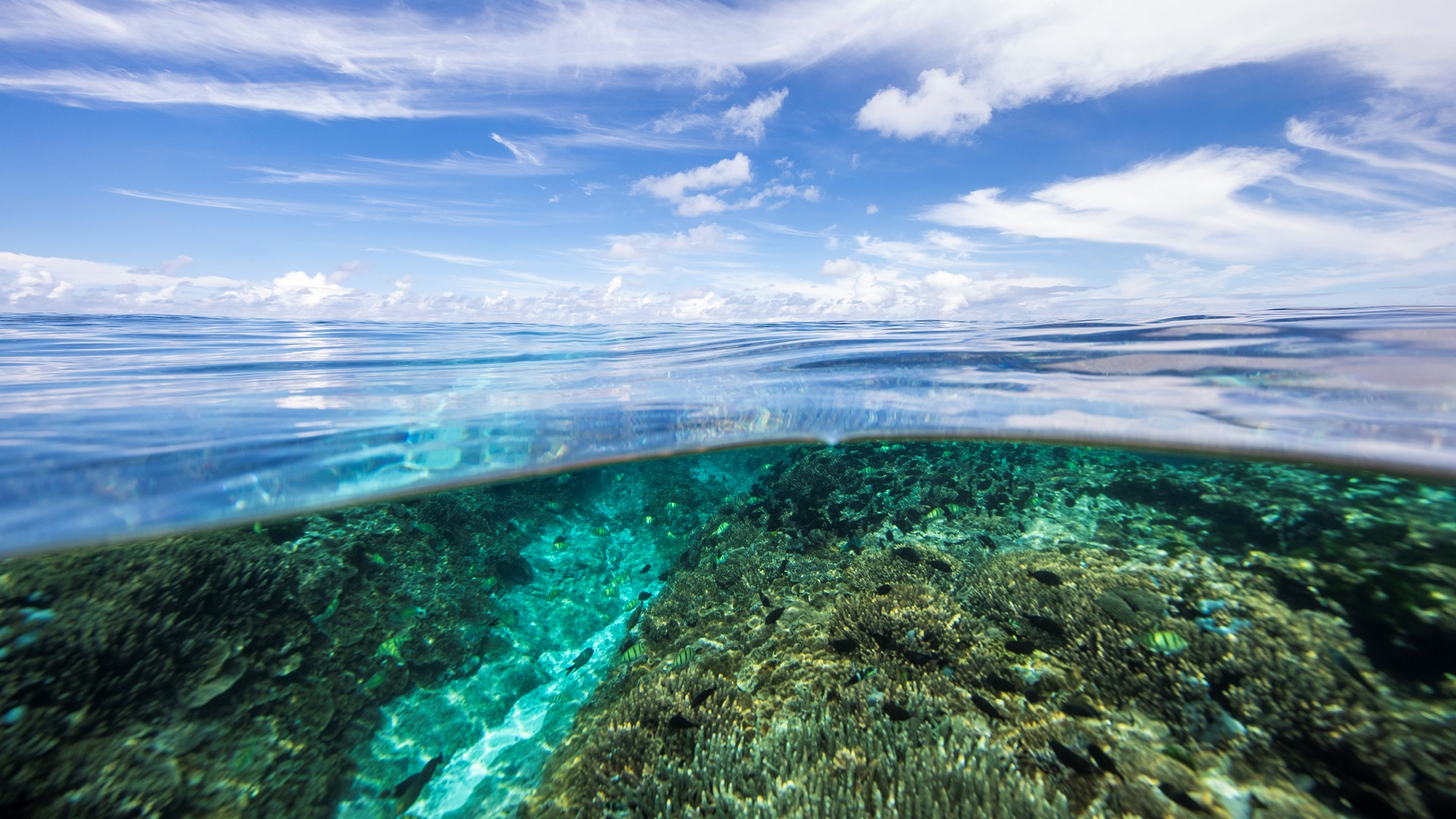 great barrier reef_microplastic pollution_ocean pollution