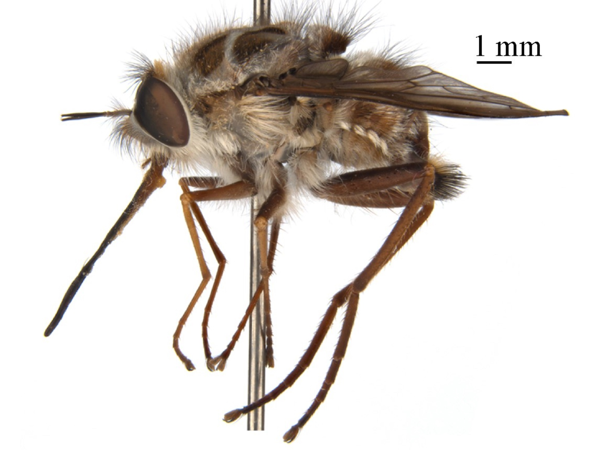 night king_bee fly_our planet