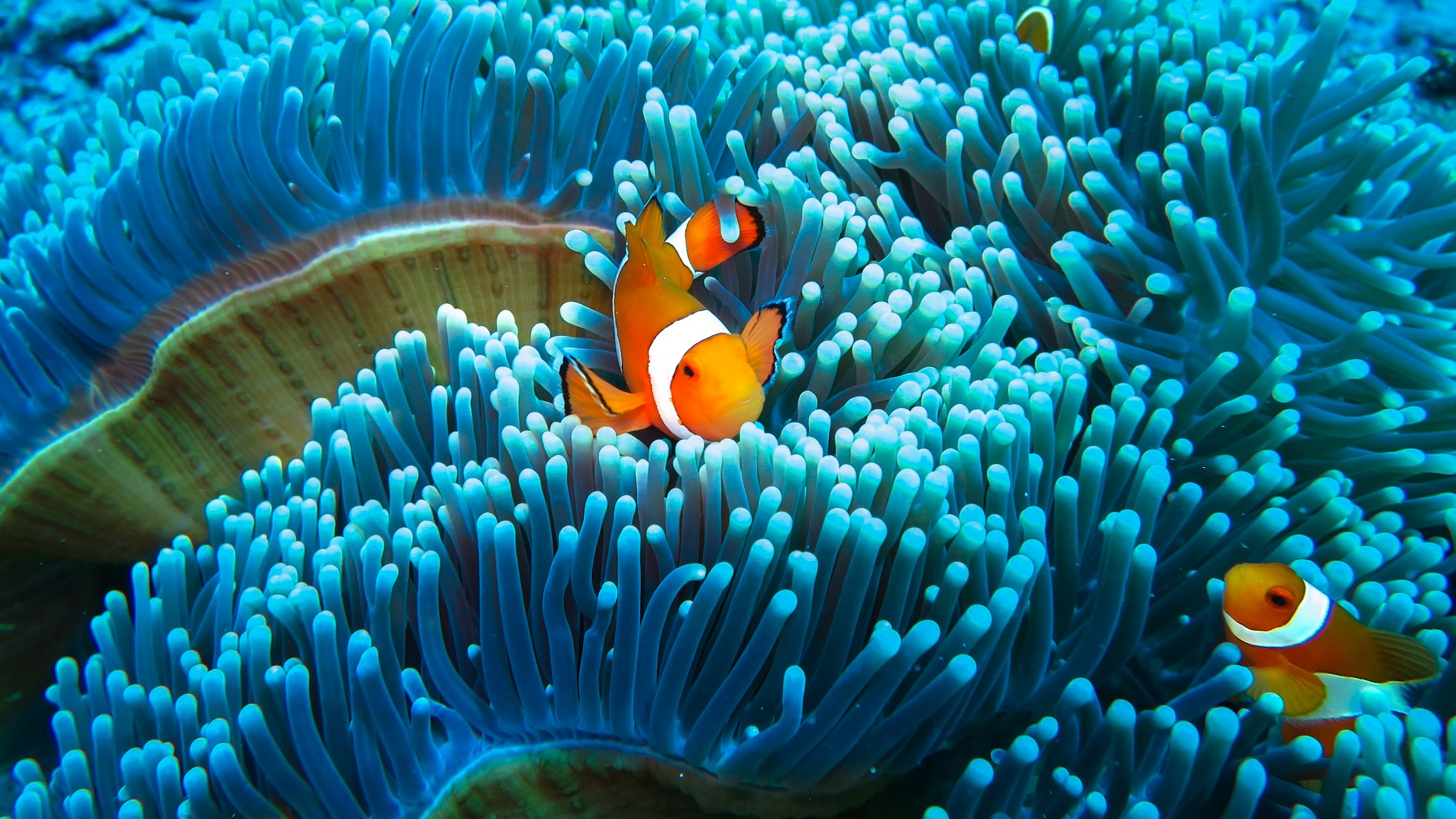 artificial light_clownfish_our planet