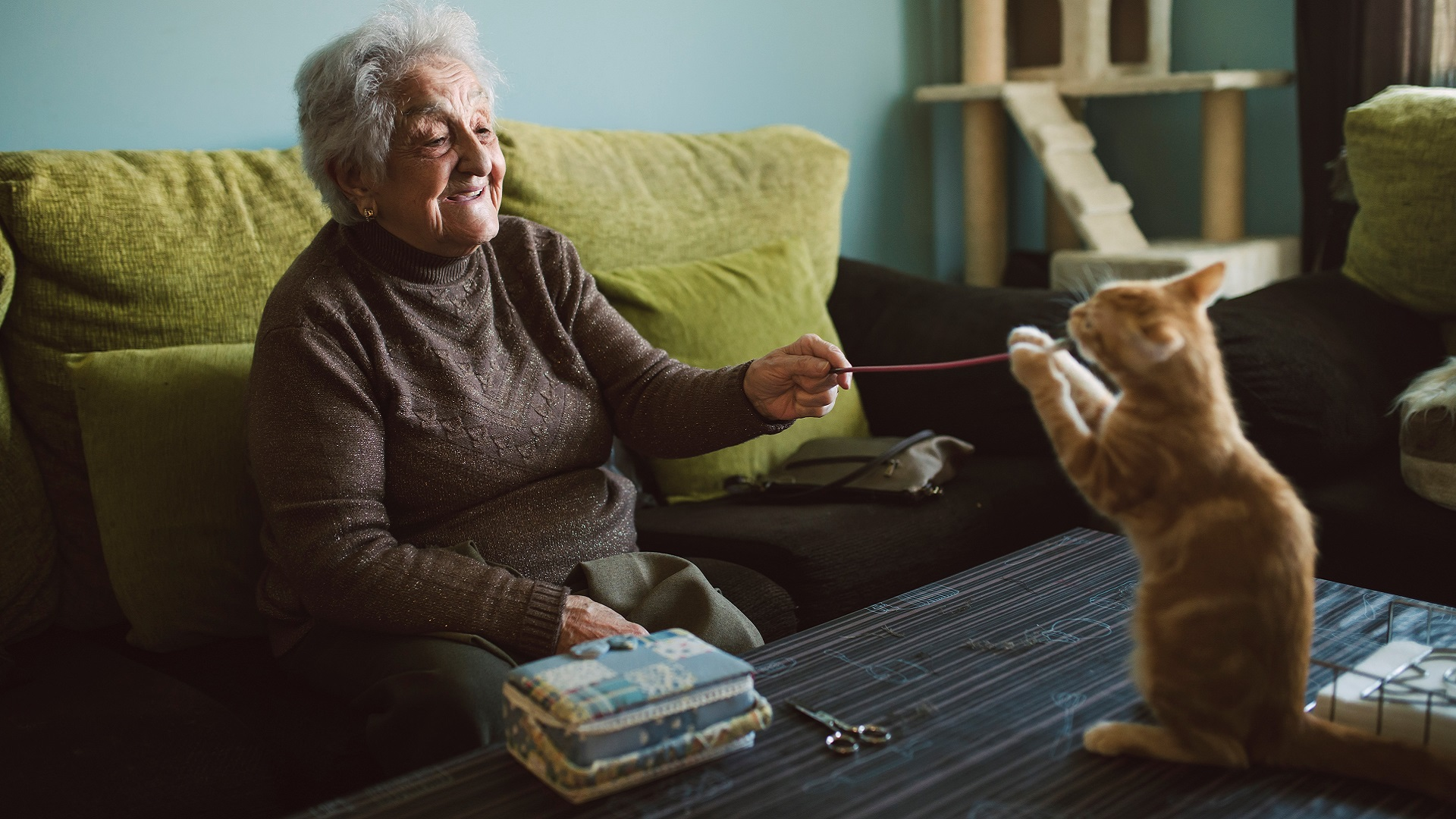 pets_aged care_elderly