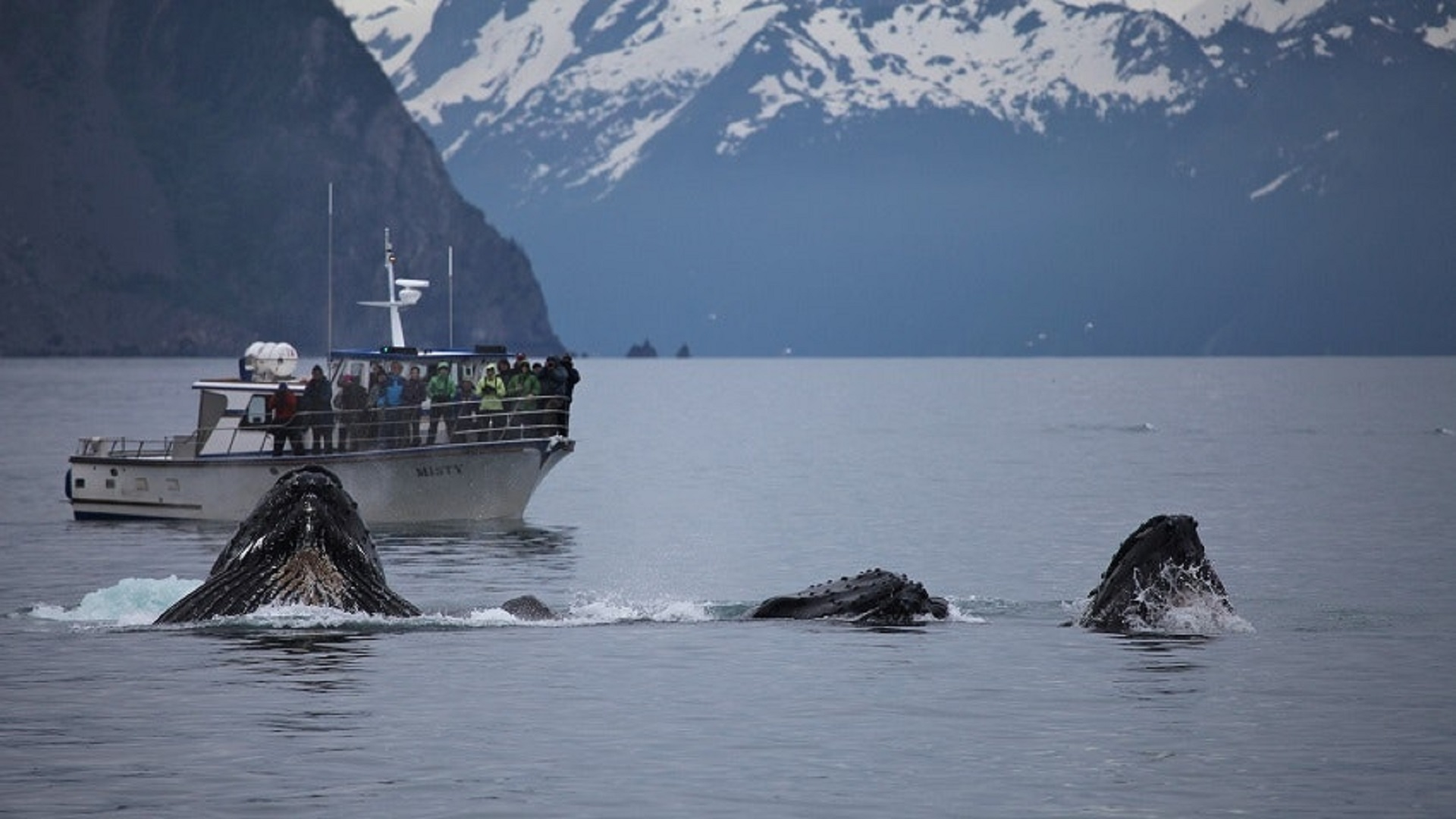 humpback whales_whales_tourists