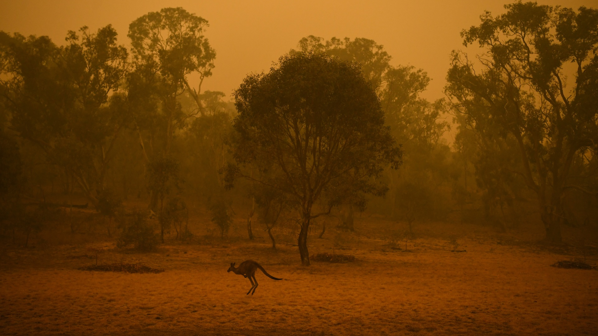 bushfires_animals_wildlife