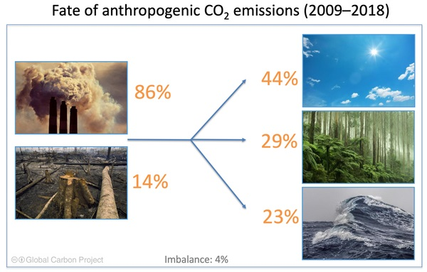 carbon dioxide fertilisation_trees_green carbon
