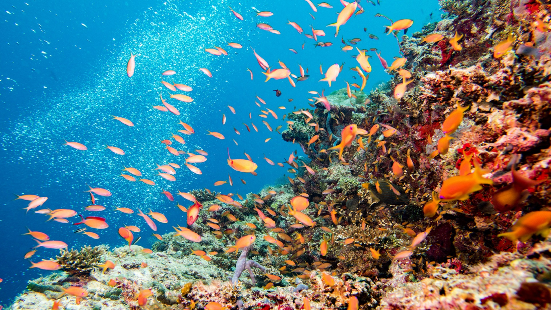 marine protected areas_conservation_marine ecosystems