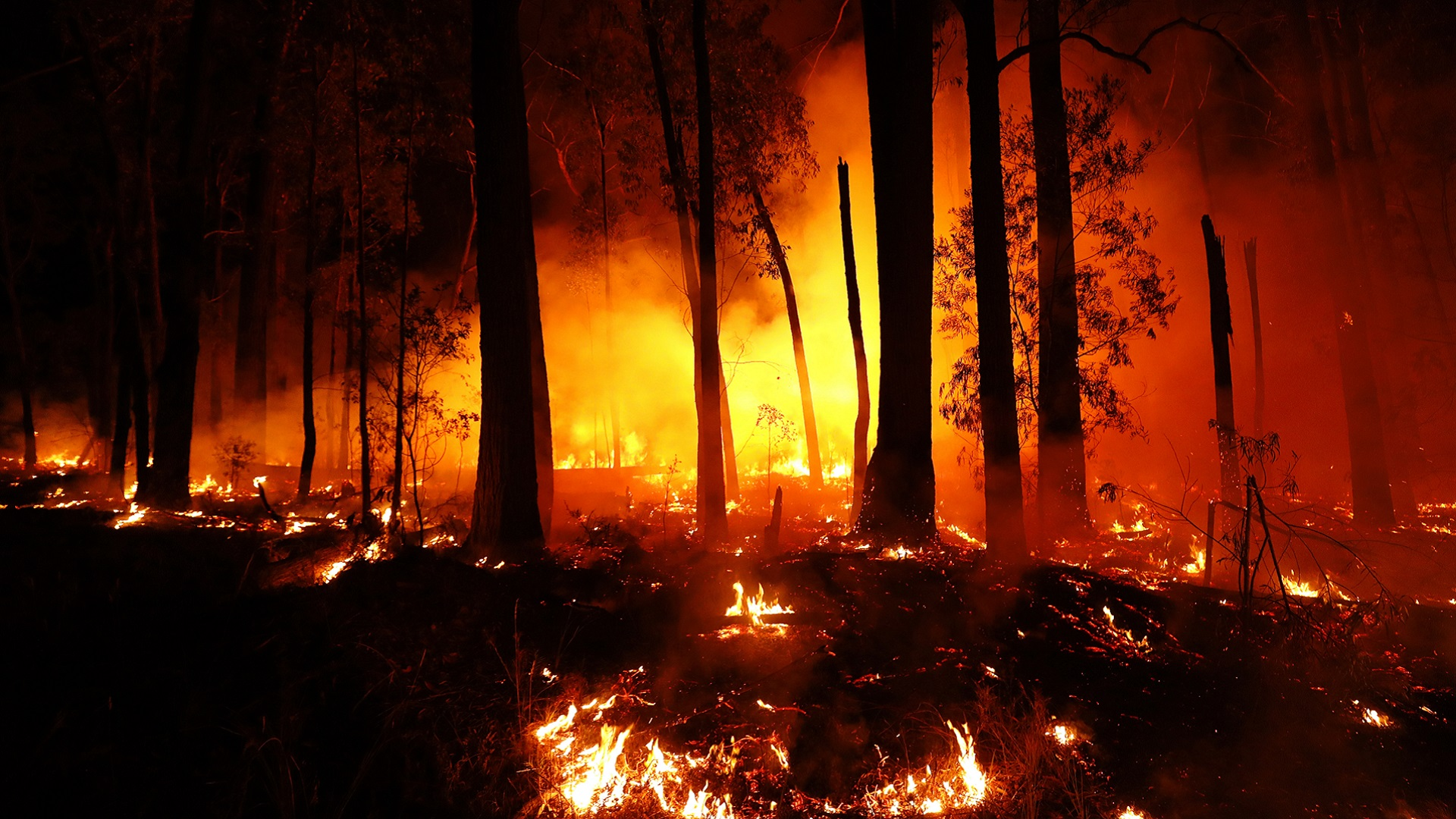 Bushfires are increasing in size and frequency
