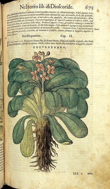 rhubarb Italian medical book history