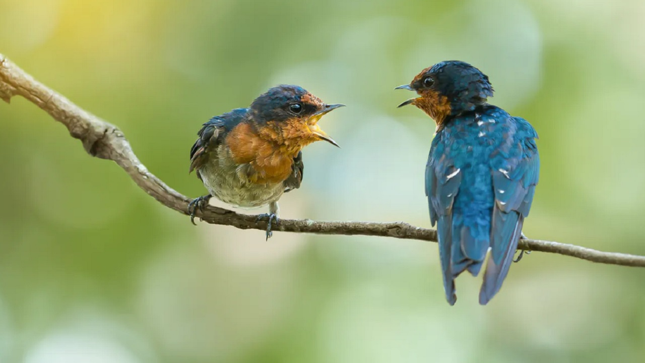 Birds squawking at each other