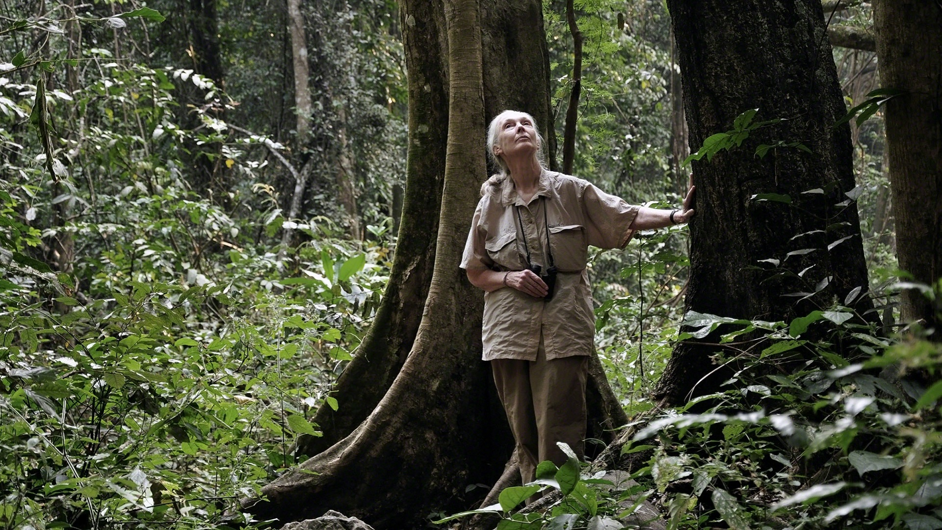jane goodall_chimpanzee_jane goodall in the forest