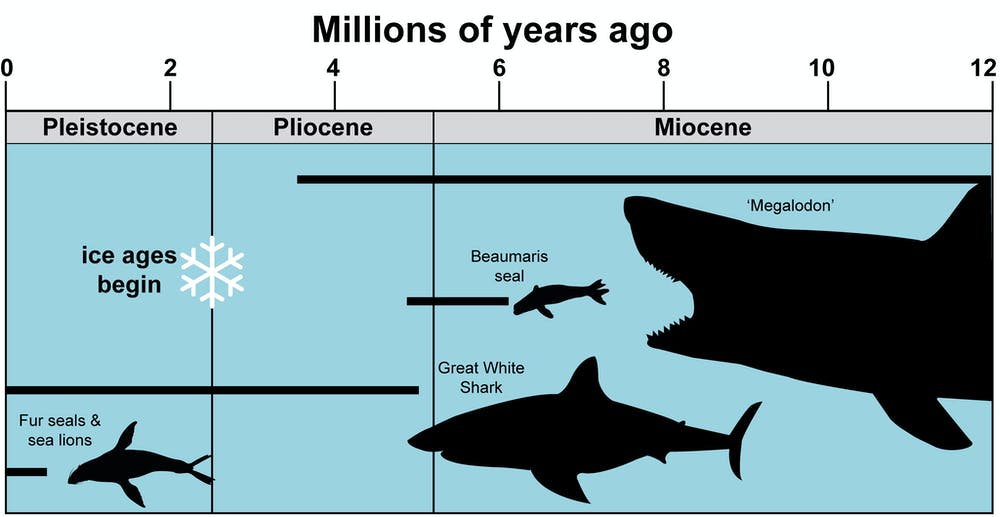 ancient seals_megalodon_marine animals size chart