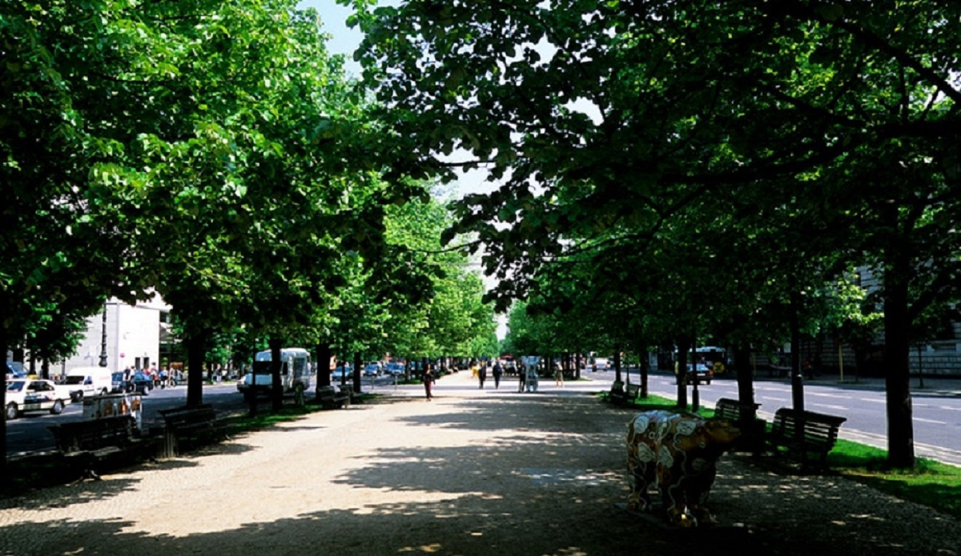 The importance of urban trees