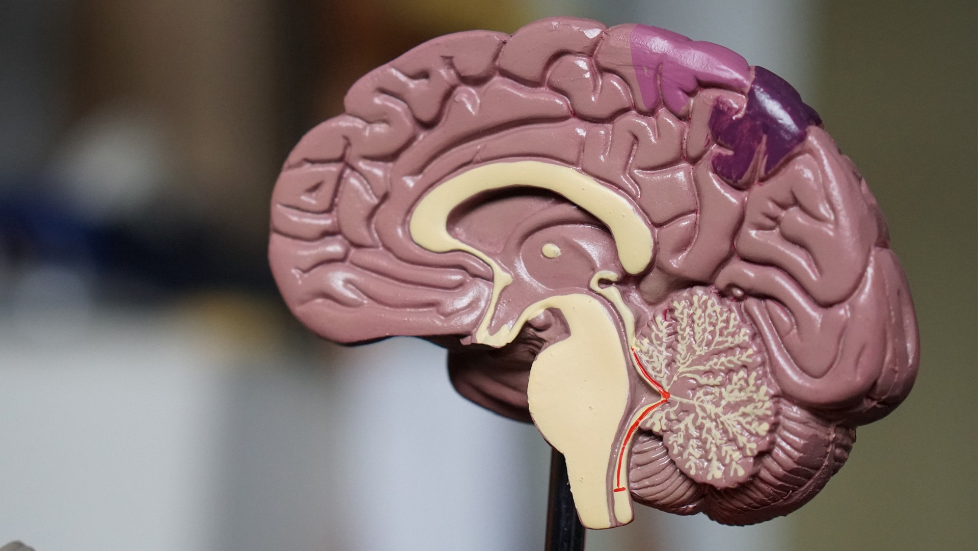 Can't get you outta my head: study finds 'hidden' thoughts in visual part of brain