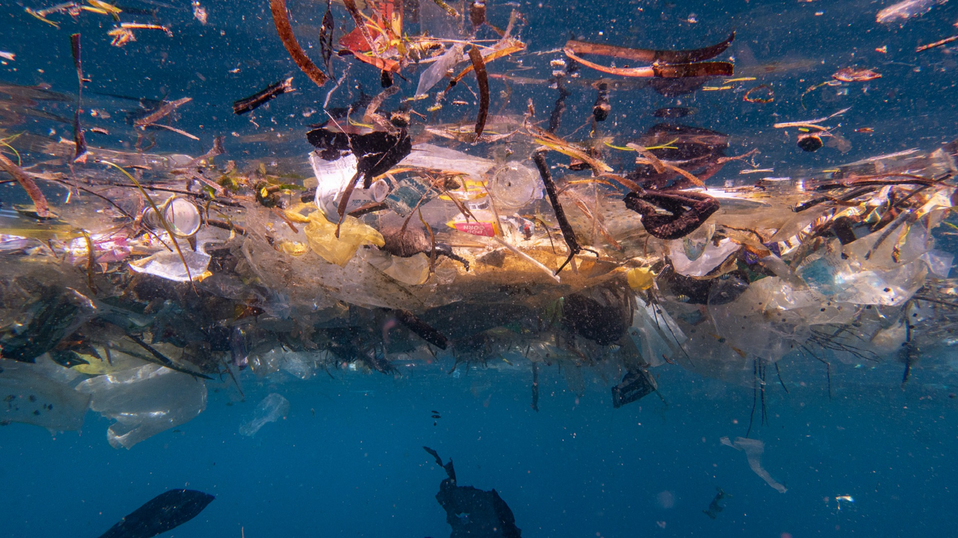 Researchers estimate up to 14 million tonnes of microplastics lie on the seafloor